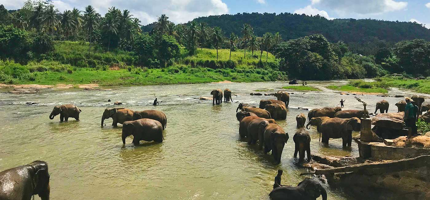 Elephant Orphanage in Pinnawala Sri Lanka