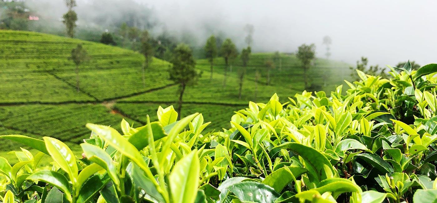 Hilly Views of Sri Lanka